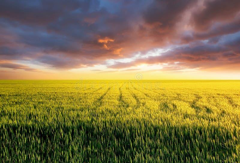 Pole podczas zmierzchu Rolniczy krajobraz przy lato czasem Przemysłowy krajobraz jako tło zdjęcia stock