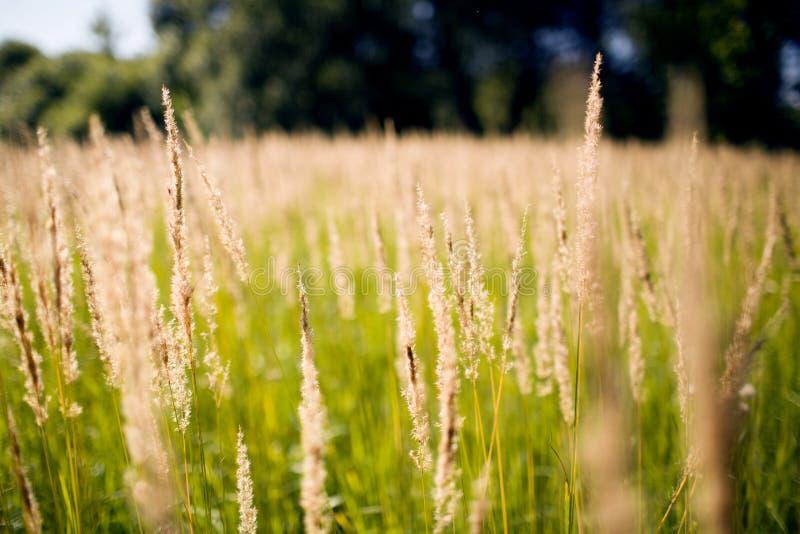 Pole w jesień dniu obraz stock