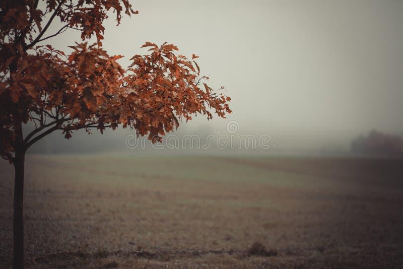 Pole w jesieni z ranek mgłą obraz stock