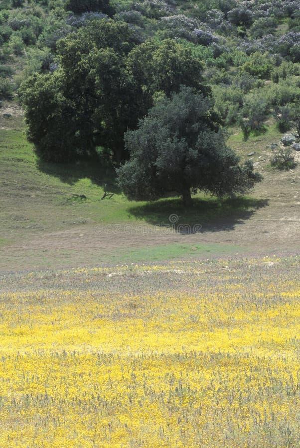 Pole w wiośnie, Kalifornia zdjęcie stock