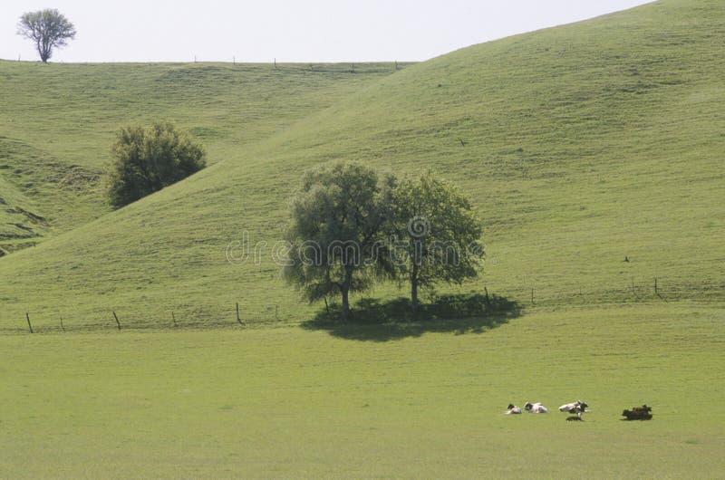 Pole w Wiosna zdjęcie stock