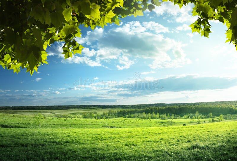 Pole wiosny trawa fotografia stock