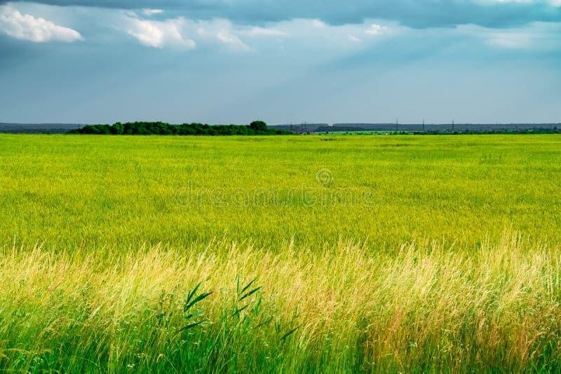 Pole z żółtymi dandelions i błękitną łąką, niebo, zieleń, horyzont, niebo, słońce, piękno, chmury, błękit, kolor żółty, plenerowy zdjęcie stock