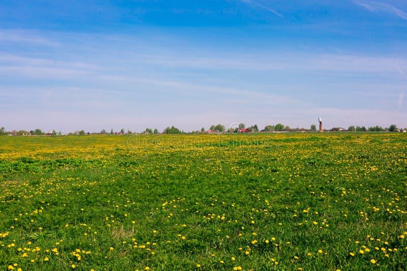 Pole z żółtymi dandelions w świetle dziennym, wiejskim, wsi lanscape fotografia stock