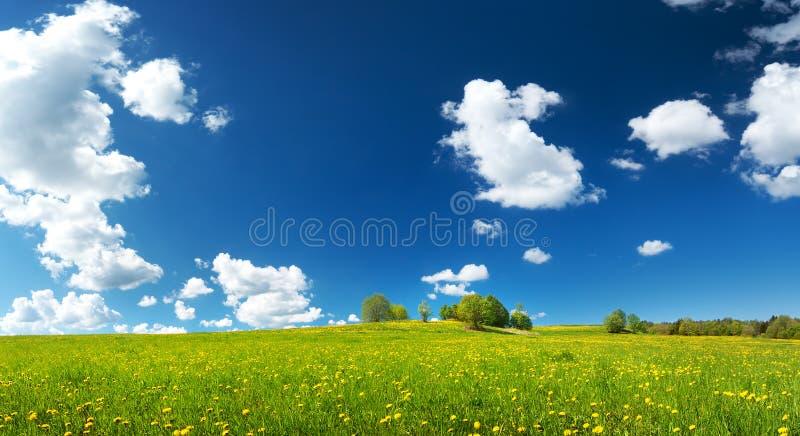 Pole z dandelions i niebieskim niebem fotografia stock