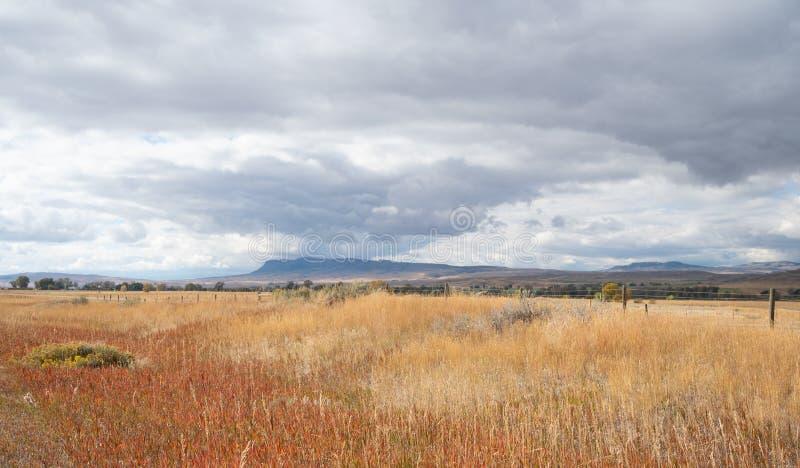 Pole z jesieni szarość i trawą Chmurnieje Nad obrazy royalty free