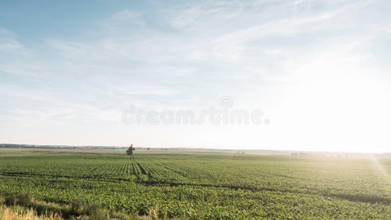 Pole z trawą z chmurnym niebem jaskrawym lata słońcem i Pi?kny lato wsi krajobraz Natura zdjęcie royalty free
