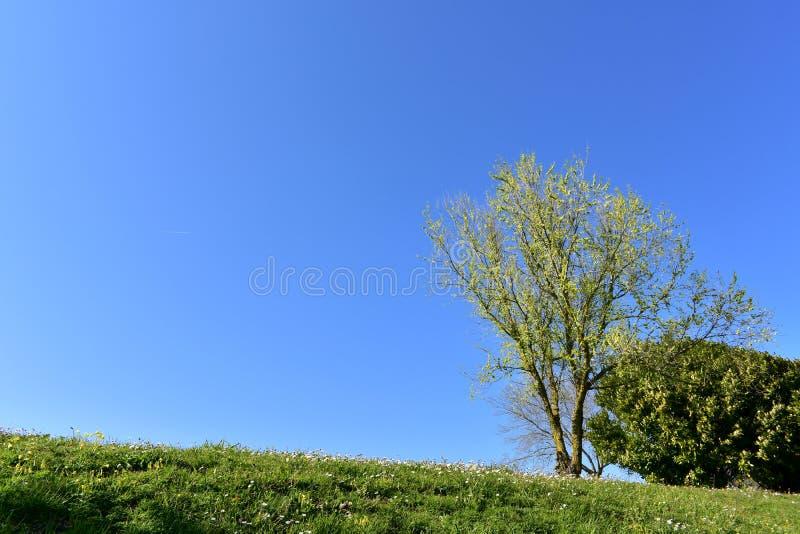Pole z trawą, kwiatami, drzewami i niebieskim niebem, obraz royalty free