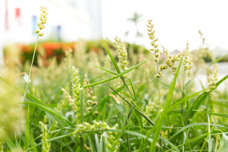 Pole z zielenią kwitnie głębię pola makro- zakończenie obraz stock
