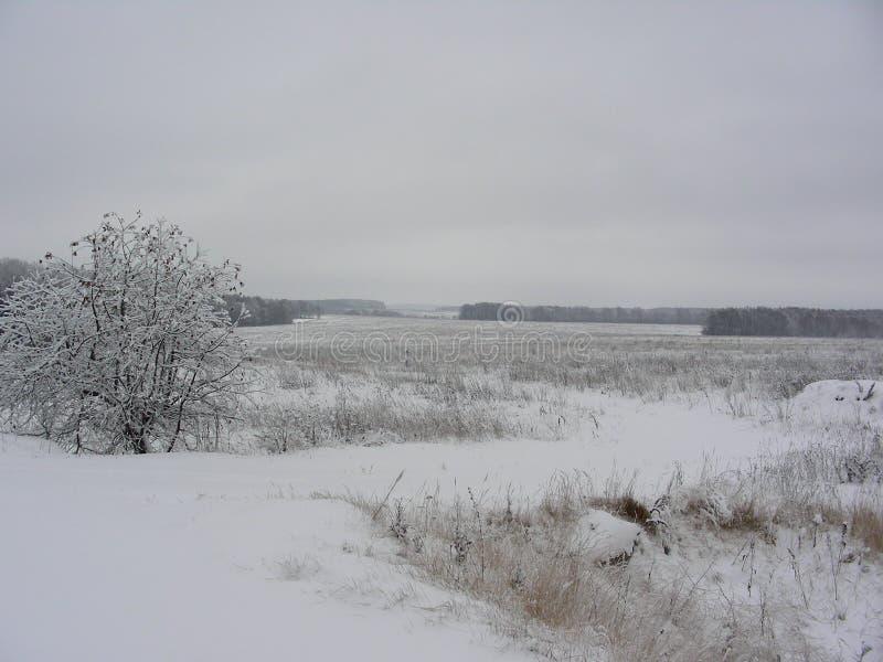 Pole zakrywał z śniegiem zdjęcie stock