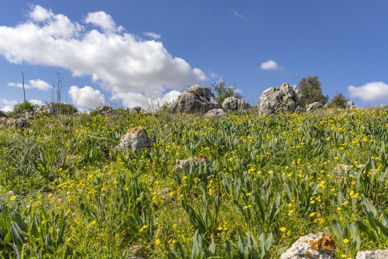 Pole zakrywający z kolorem żółtym kwitnie przeciw niebieskiemu niebu z chmurami i kamienie z liszajem zdjęcia royalty free