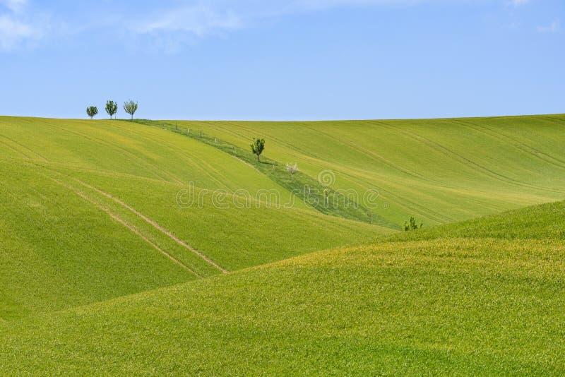 Pole zieleni zbożowy i chmurny niebieskie niebo zdjęcie stock