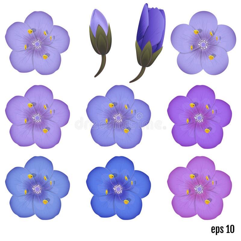 Polemonium caeruleum. Greek Valerian - perennial herbaceous medicinal plant. vector illustration