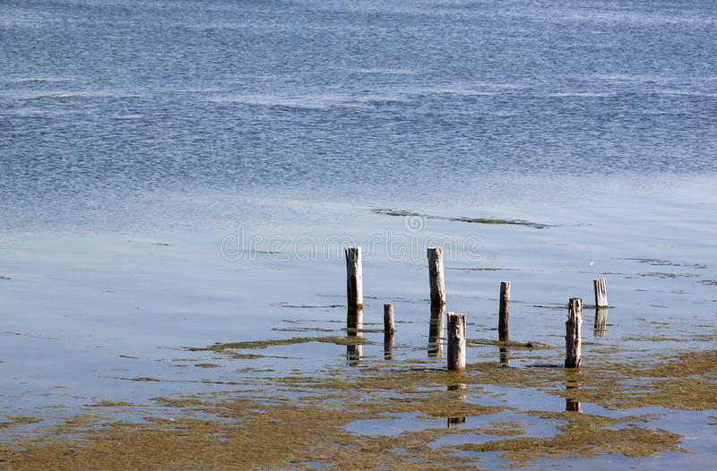 Poles on the lake - RAW format. Wooden poles on the lake royalty free stock images