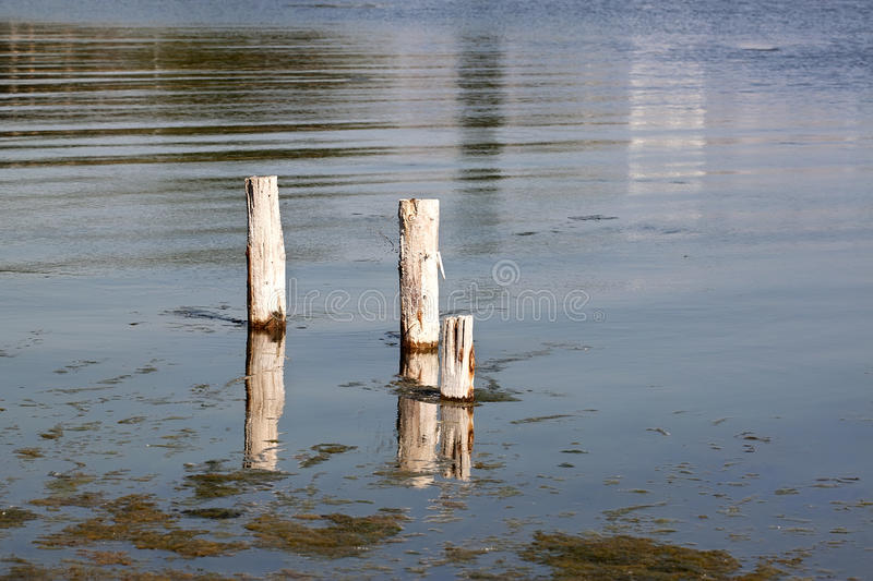 Poles on the lake - RAW format. Wooden poles on the lake stock image