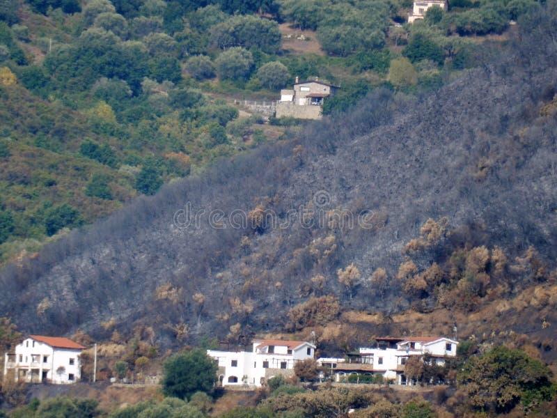 Policastro Bussentino - colline brûlée photos libres de droits