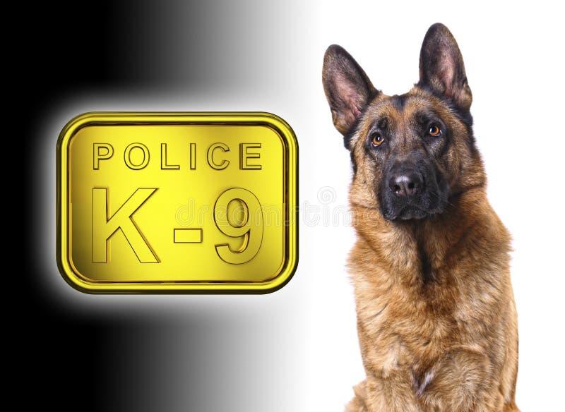 Police allemande du shepard k9 images stock