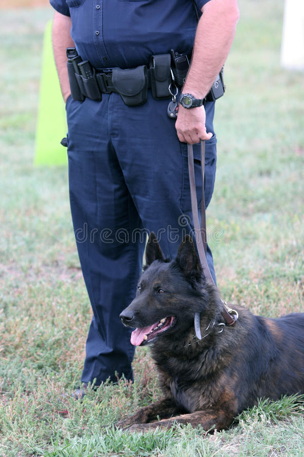Police Dog. With human partner at demonstration royalty free stock image