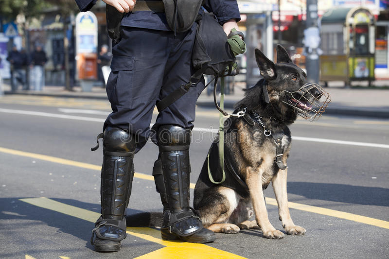 Police dog. A policeman with his police dog stock photography