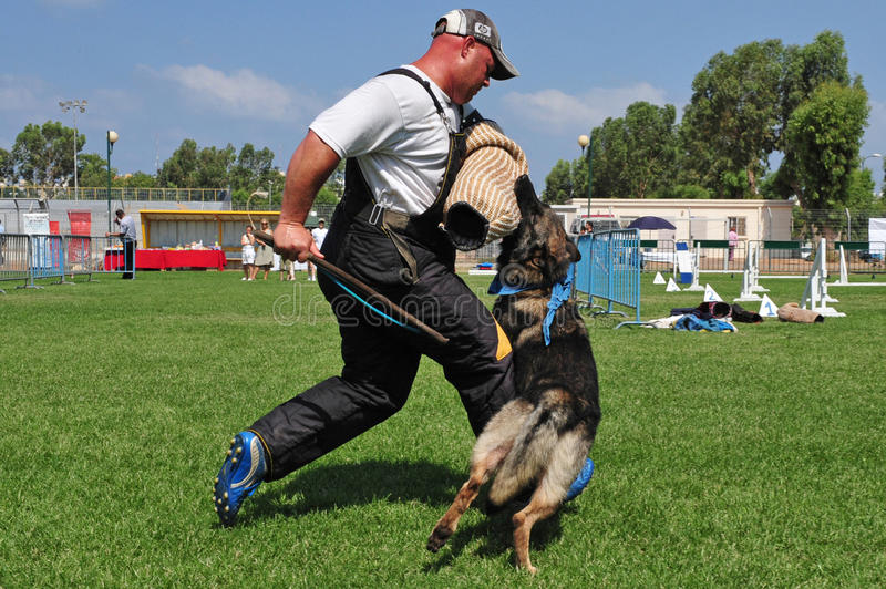 Police dog. ASHDOD, ISR - JULY 31:Police dog attack on July 31 2009.IT trained specifically to assist police and other law-enforcement personnel in their work royalty free stock photo