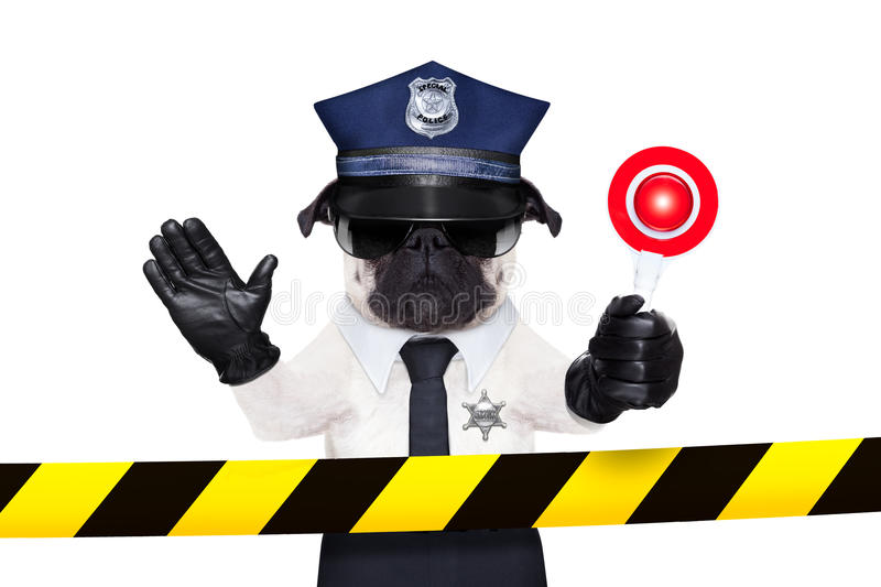 POLICE DOG. ON DUTY WITH stop sign and hand behind a warning stripe band or tape isolated on white blank background stock photography