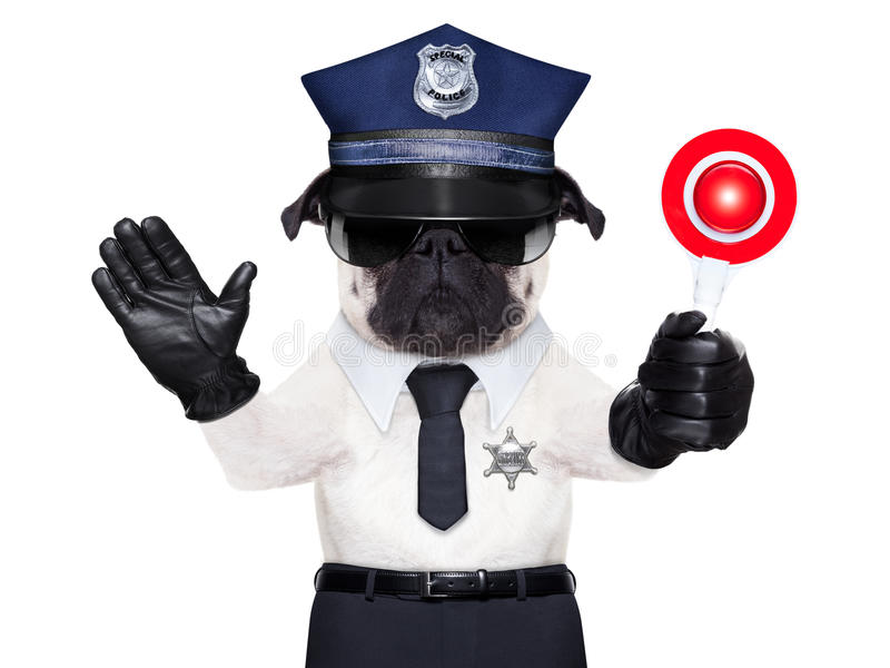 POLICE DOG. ON DUTY WITH stop sign and hand , isolated on white blank background royalty free stock photo