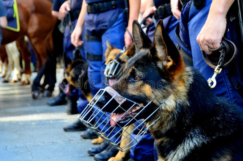 Police dog. A police officer and his police dog royalty free stock images