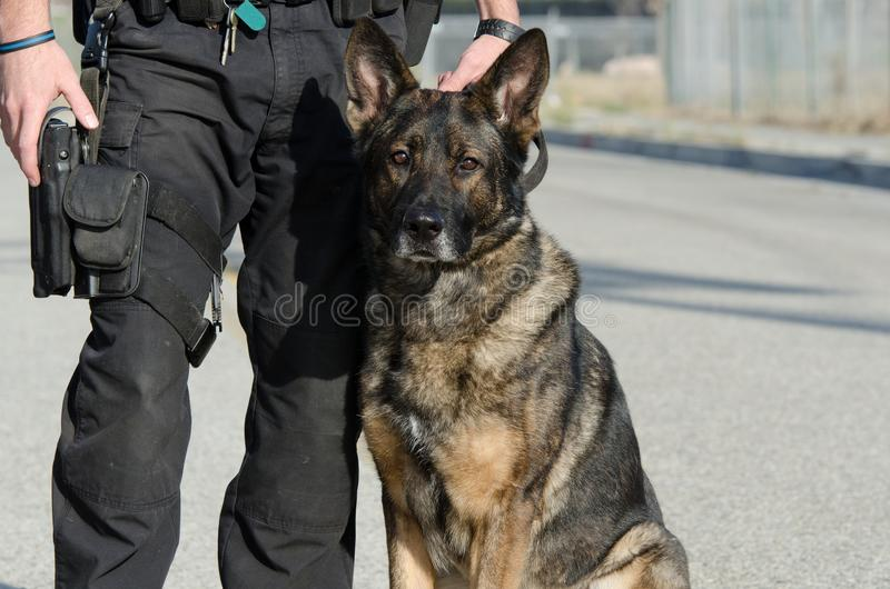 Police Dog. A police dog sitting next to his handler royalty free stock photography