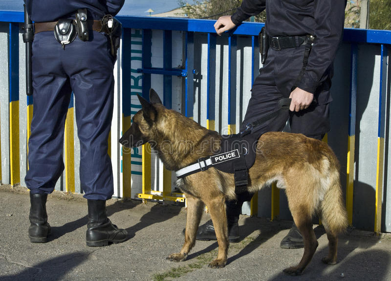 Police dog. Stay with policeman royalty free stock photos
