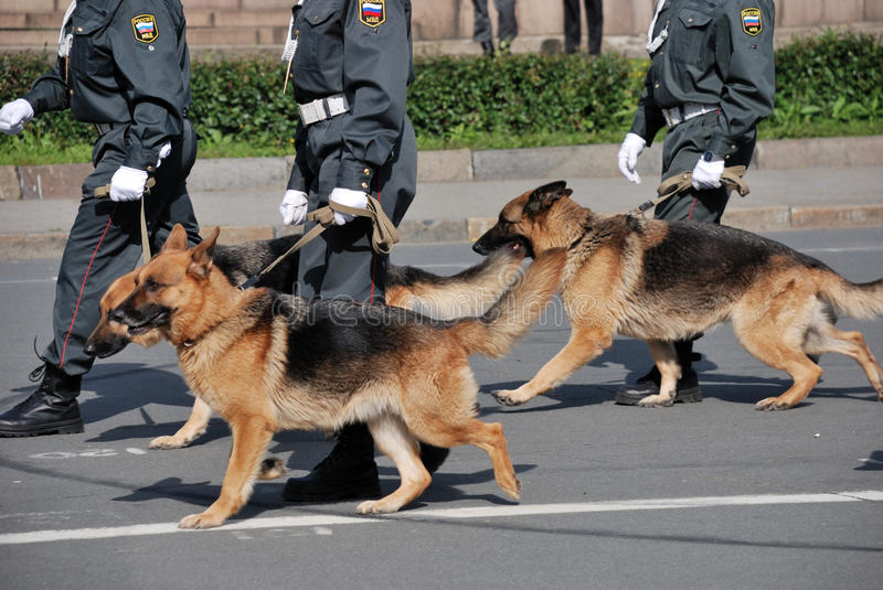 Police with dogs walking on the street royalty free stock photo