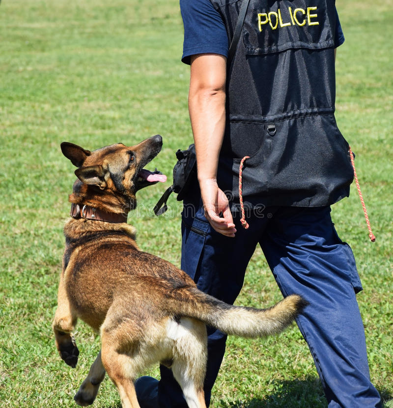 Police man with his dog. Police man with his German shepherd dog royalty free stock photos