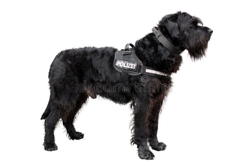 Policedog стоковые изображения