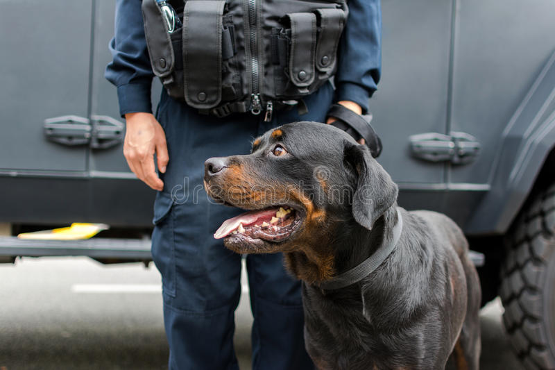 Policeman and balck dog on duty. Policeman and black dog on duty for important events royalty free stock image