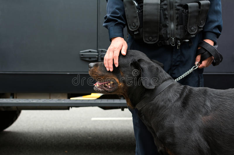 Policeman patting a police dog. Policeman is calming down a police dog by patting on its head stock image