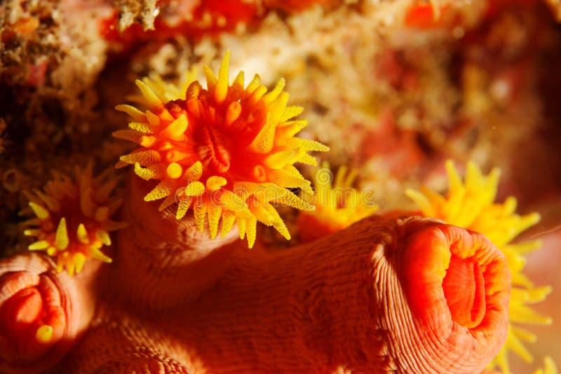 Poliepen - Overzees Andaman stock foto's
