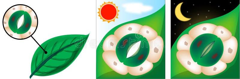 Polilla de colibrí libre illustration