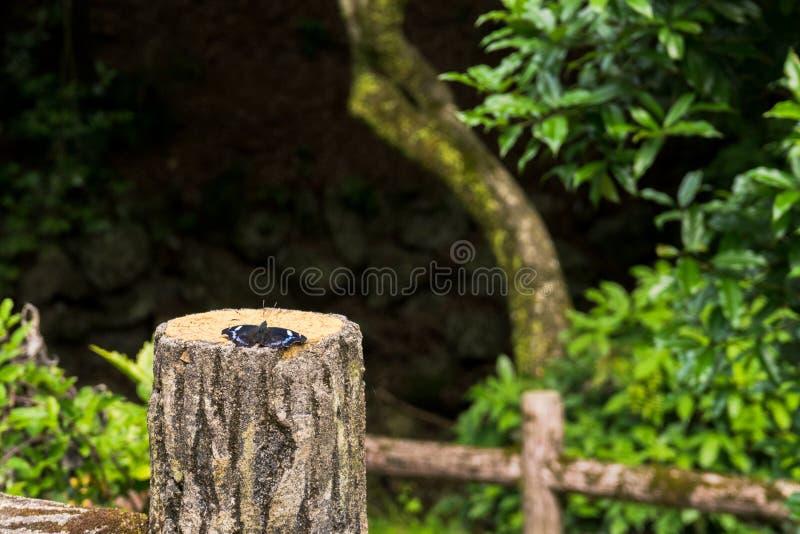 Polilla hermosa en tronco del árbol fotografía de archivo libre de regalías