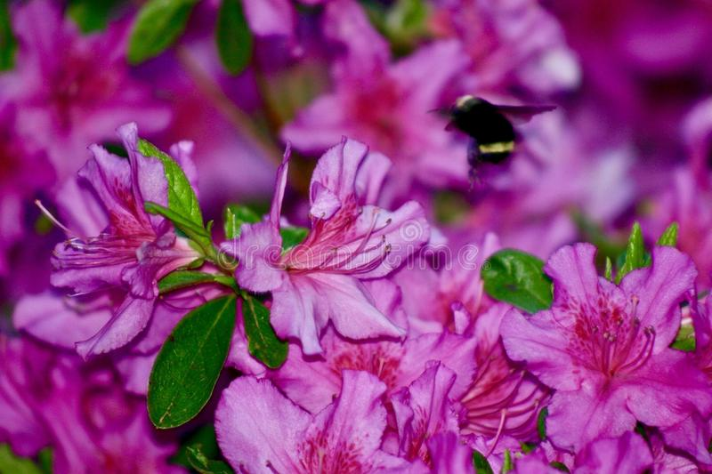 Polination. Pollinator in production stock photo