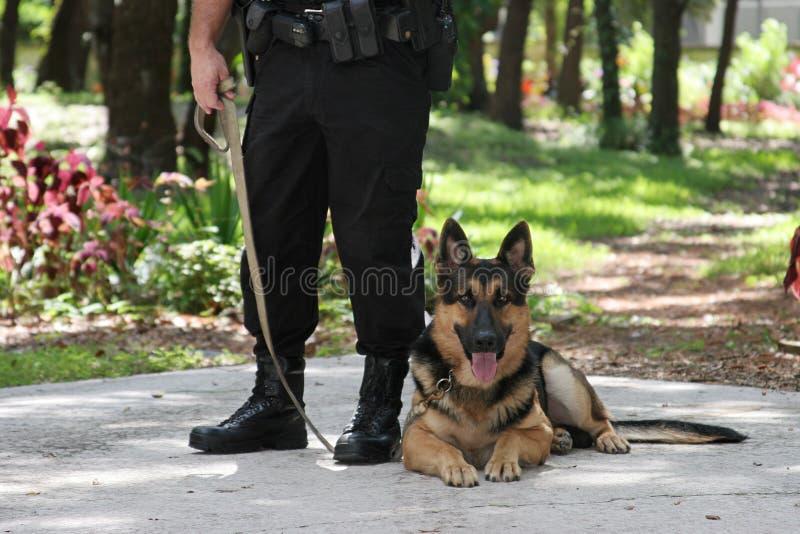 polis för 2 hund arkivbild