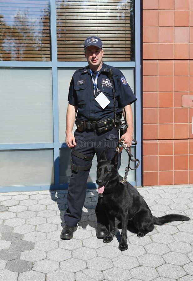 Polis och tysk herde K-9 Taylor som för NYPD-transportbyrå K-9 ger säkerhet på den nationella tennismitten under US Open royaltyfri foto