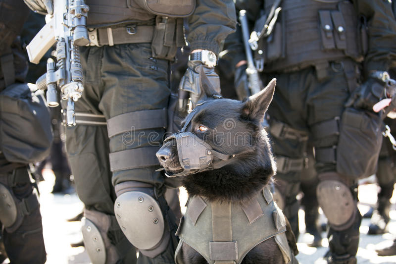 Polisen förföljer arkivfoton