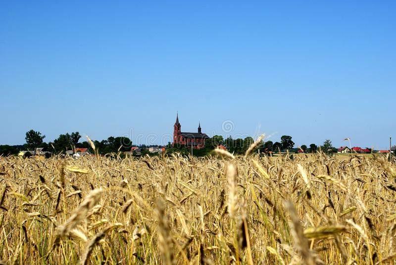 Polish church in the countryside among grain. Typical Polish countyside with church stock photo