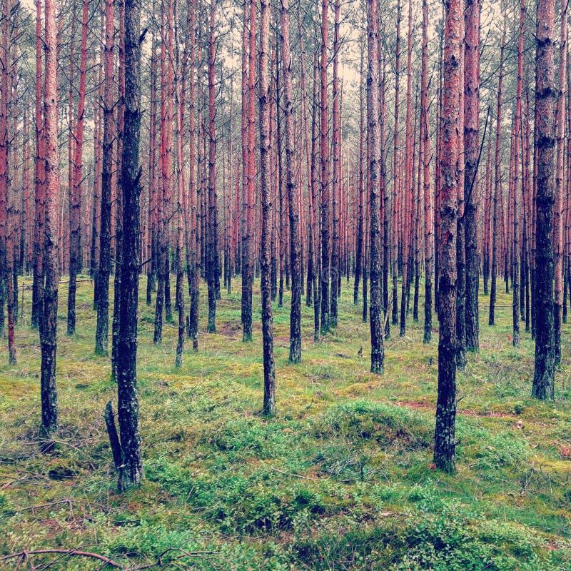 Polish Forest stock photos
