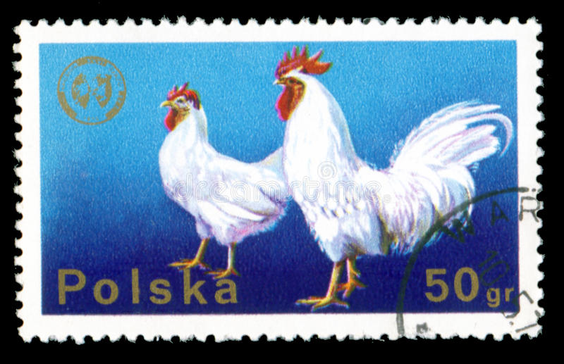 Polish postage stamp. The Polish postage stamp - a and hen vector illustration