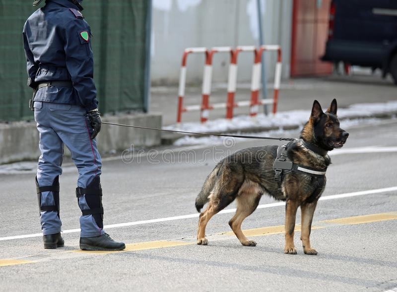 polishund av den italienska polisen i staden royaltyfria foton