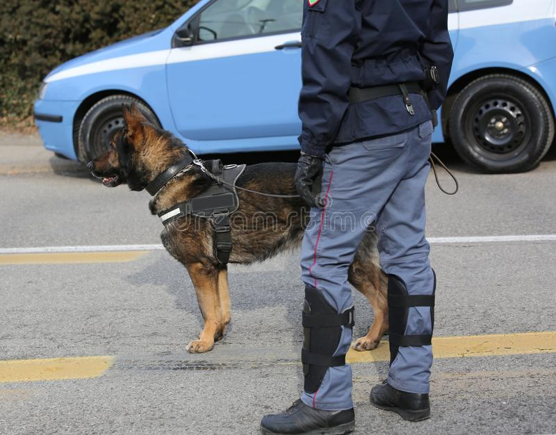 Polishund av den italienska polisen under en händelse fotografering för bildbyråer
