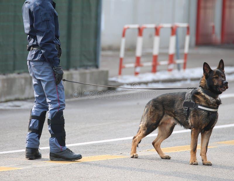 Polishund med polisen under en tumult i staden royaltyfri foto