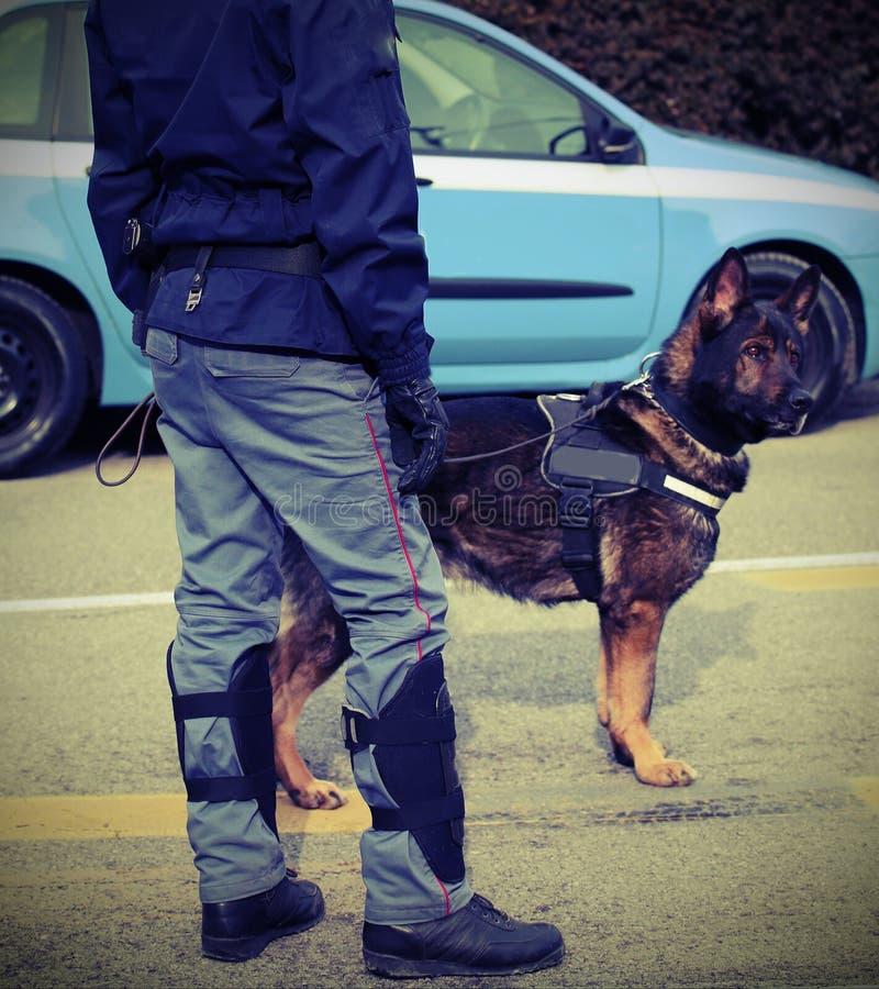 Polishund, medan patrullera stadsgatorna för att förhindra terroris royaltyfria foton