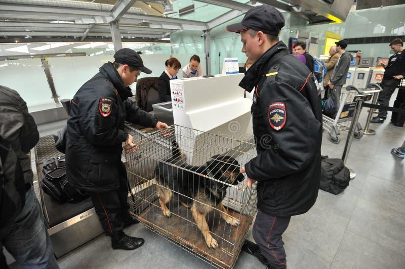 Politie met honden bij de luchthaven royalty-vrije stock afbeeldingen