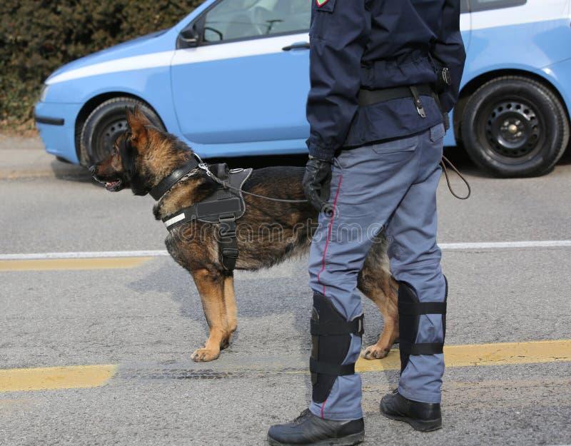 Politiehond van de Italiaanse politie tijdens een gebeurtenis stock afbeelding